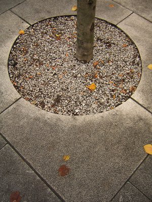 Pavement Tree