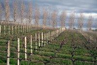 Tarrawarra Estate Vines