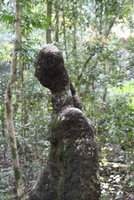 Scary_human_tree.jpg