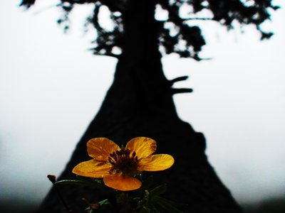 Flower in front of Dark Tree