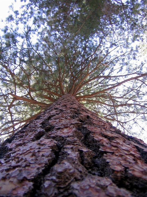 A graet tree!!