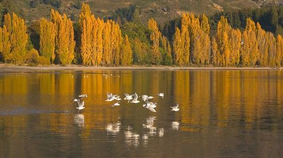 Birds over Wanaka
