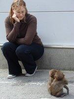 HITCH - Brenda and Monkeys