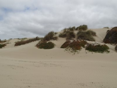 April_14_-..Beach_Dunes.jpg