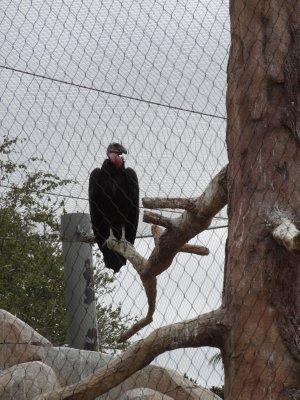 Condor 2