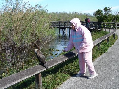 Day 123 - Everglades, Mom & Cormorant