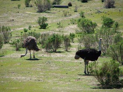 Day 178 - Ostrich Farm