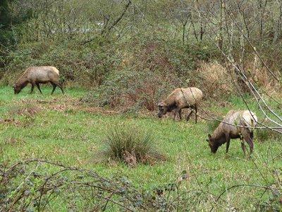 Day 200 - Wild Elk