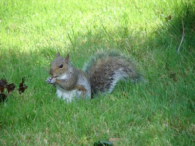 Day 30 - Niagara Falls, Squirrel