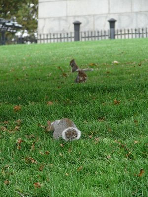 Day 53 - Just Squirrels