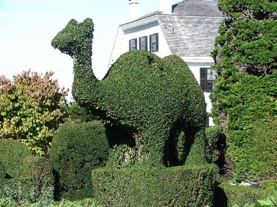 Day 58 - Topiary Gardens, Camel
