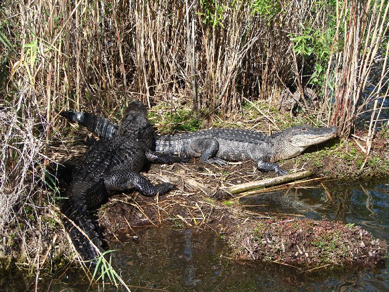 Day 123 - Everglades, Two Gaters