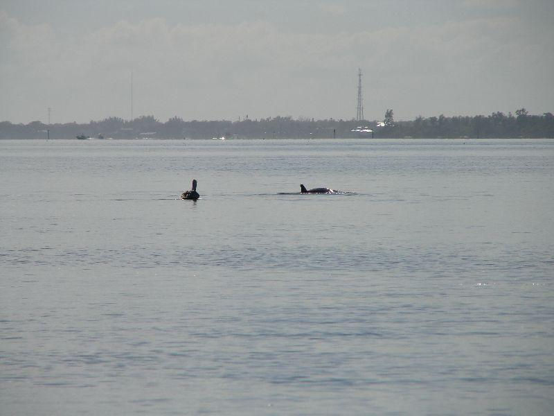 Day 131 - Pelidan & Dolphin