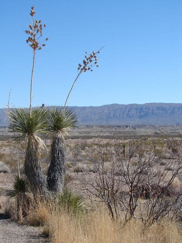 Day 158 - Big Bend, Yucca & Valley