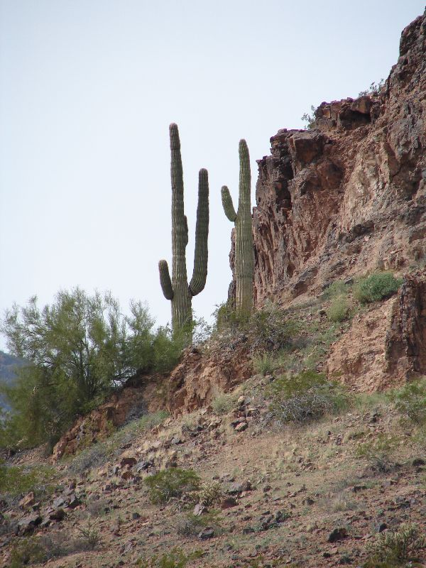 Day 170 - Saguaro & Rock