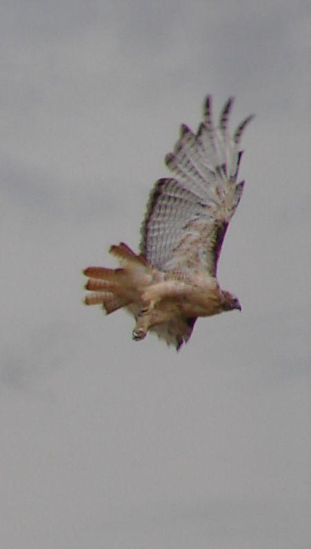 Day 8 - Hawk