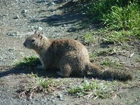 Day 180 - Squirrel