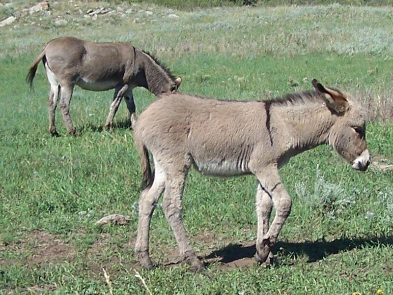 Day 10 - Baby Donkey