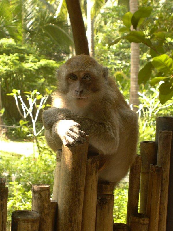 Pensive Monkey - Rai Lay, Thailand