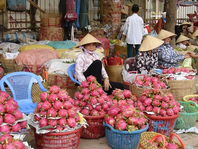 Selling Dragon Fruit