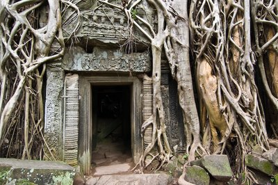 Ta Prohm doorway with tree