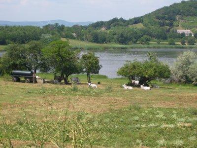 Horned_cow..ke_ride.jpg