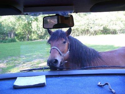 Horse_in_View__.jpg