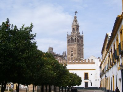 Seville_Orange_square.jpg