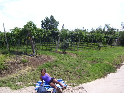 Taking a break in the sun between the vineyards!