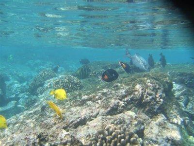 snorkel_fish2__Small_.jpg