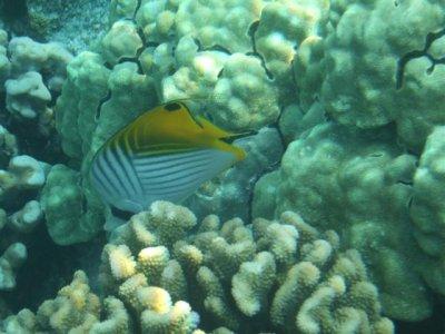 snorkel_fish__Small_.jpg