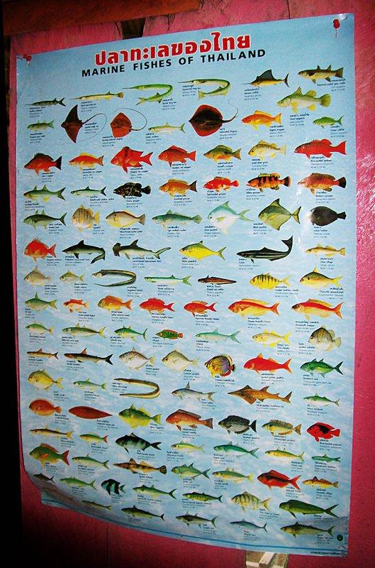 koh lipe thai marine life