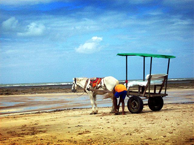 morro horse taxi