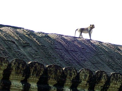 Angkor ruins - monkey on the roof