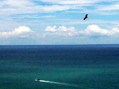 tarutao eagle low res