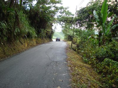 Cameron_Highlands_36.jpg