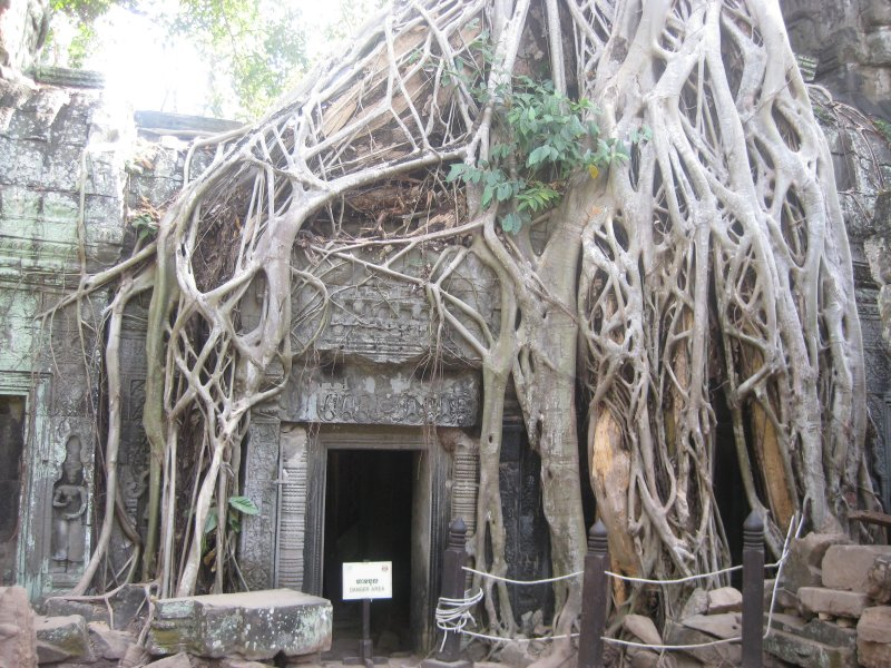 Tree House, Angkor Watt