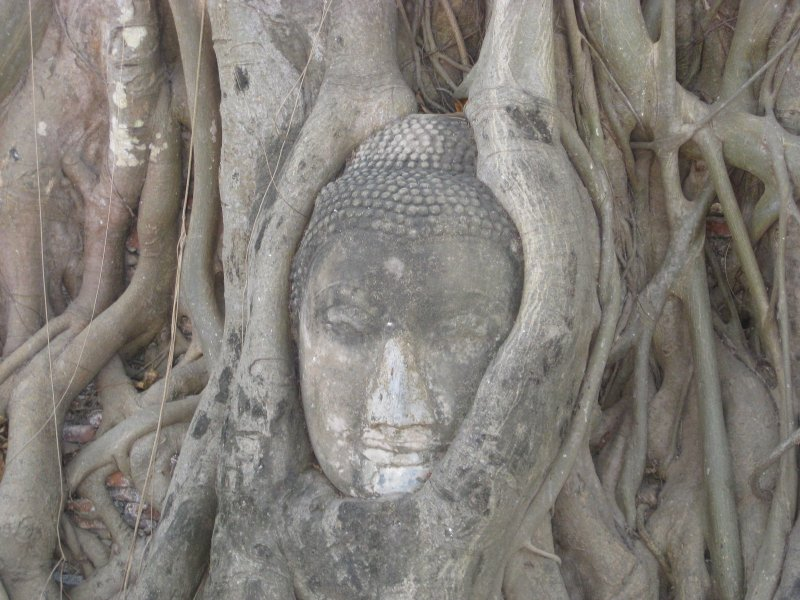 Buddha in Tree Roots