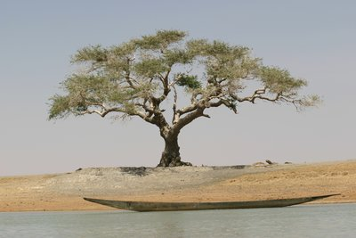 The Niger River