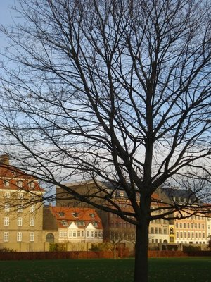 copenhagen_tree.jpg