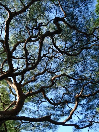 japan_treeup