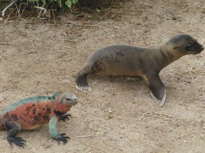 Galapagos_..a_2_014.jpg