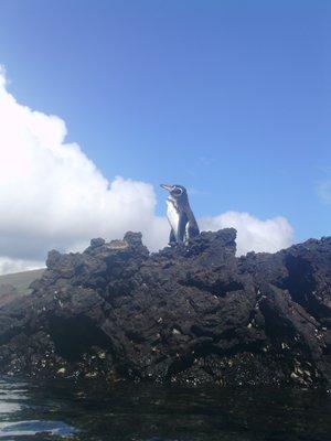 Galapagos_..a_2_078.jpg