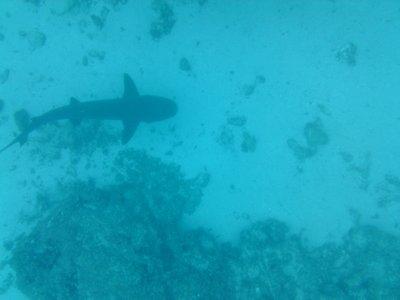 Galapagos_..a_2_079.jpg