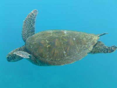 Galapagos_..a_2_229.jpg