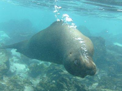 Galapagos_..a_2_256.jpg
