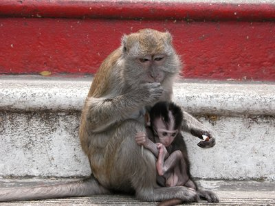 Monkey on Stairs