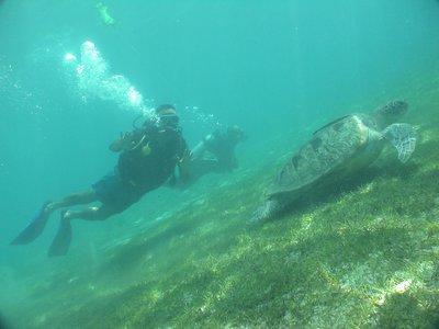 Sea Turtle off the coast of Pandan Island - Mindoro, Philippines