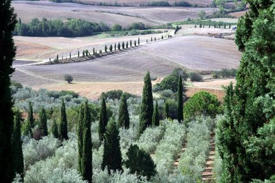 Tuscan scenery from Pienza