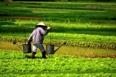 Vietnam_4_viaHalong